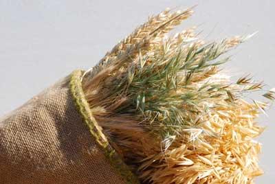 Getreidearten