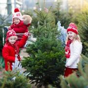 Weihnachtsbaum Verkauf auf Thomsens Farm